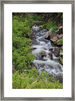 Natures Garden  Framed Print