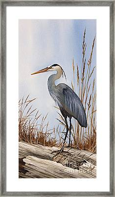 Nature's Gentle Beauty Framed Print by James Williamson