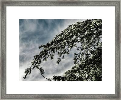 Natures Glitter Framed Print