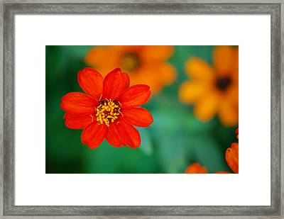 Framed Print featuring the photograph Nature's Glow by Debbie Karnes
