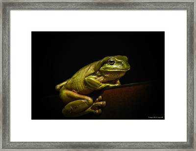 Natures Green 01 Framed Print