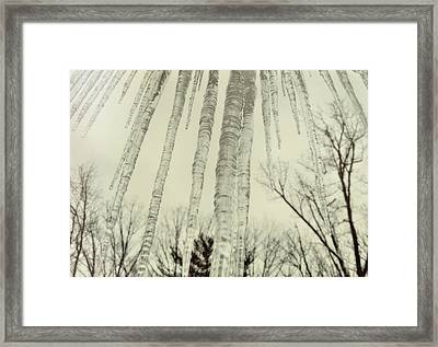 Nature's Ice Pop Framed Print by JAMART Photography