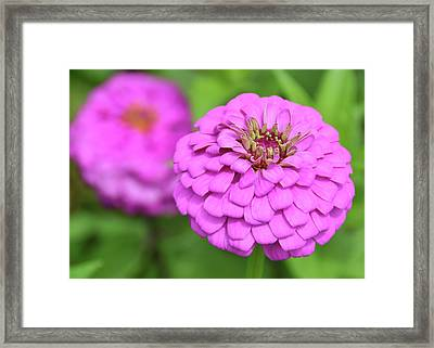 Nature's Icing Framed Print by JAMART Photography