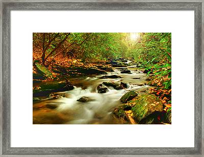 Natures Journey Framed Print by Darren Fisher