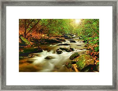 Natures Journey Framed Print by Darren Fisher