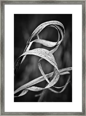 Natures Knot Framed Print