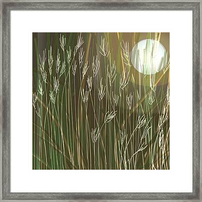 Nature's Landscape  Framed Print by Denny Casto