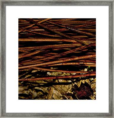 Nature's Lattice Framed Print by Gina O'Brien