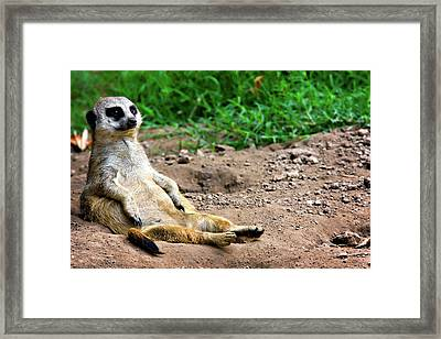 Natures Lazy Boy Framed Print by Lana Trussell