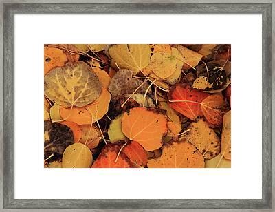 Nature Creates A Leaf Quilt Framed Print