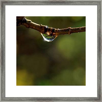 Natures Light Framed Print by Marilynne Bull