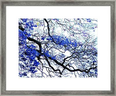 Natures Lines Framed Print