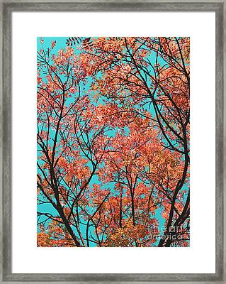 Framed Print featuring the photograph Natures Magic - Orange by Rebecca Harman