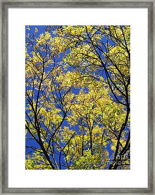 Framed Print featuring the photograph Natures Magic - Original by Rebecca Harman