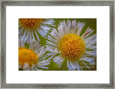 Nature's Natural Bouquet Framed Print