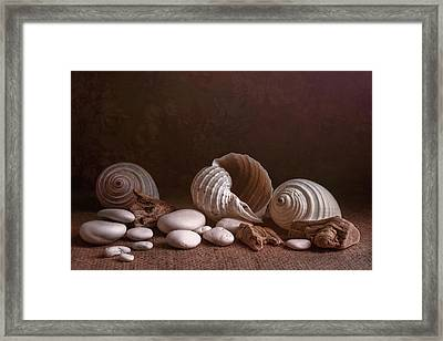 Natures Objects Still Life Framed Print
