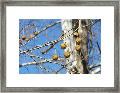 Nature's Ornaments Framed Print by JAMART Photography