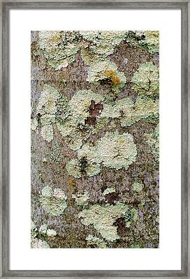 Natures Pallet Framed Print by James Temple