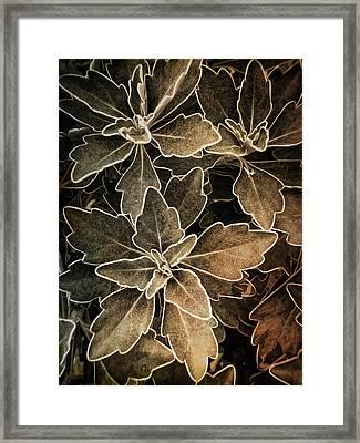 Natures Patterns Framed Print