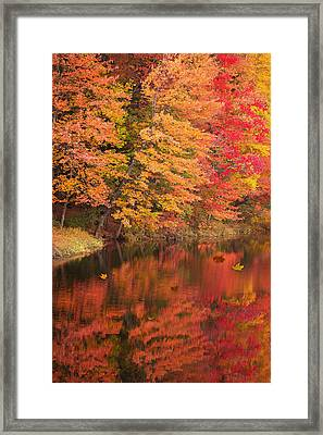 Natures Peace Framed Print by Brenda Giasson