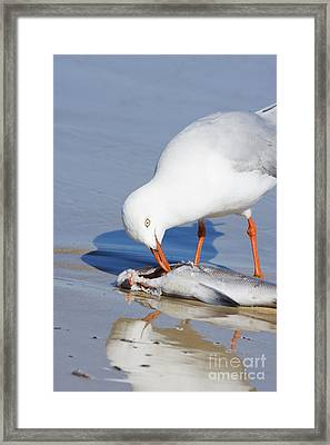 Natures Pecking Order Framed Print by Jorgo Photography - Wall Art Gallery