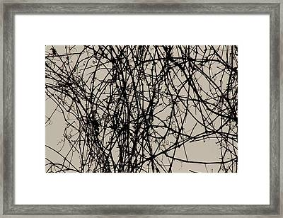 Nature's Pen And Ink 2 Framed Print by Susie DeZarn
