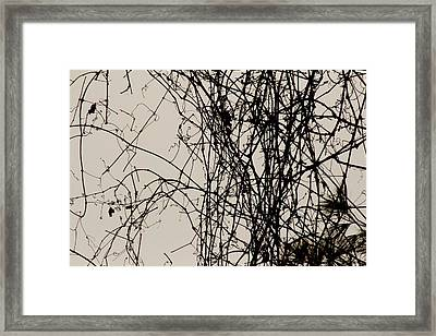 Nature's Pen And Ink Framed Print by Susie DeZarn