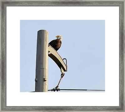 Nature's Philadelphia Eagle Framed Print