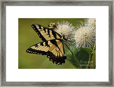 Natures Pin Cushion Framed Print