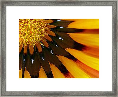 Nature's Pinwheel Framed Print