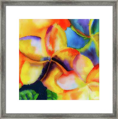 Nature's Pinwheels Framed Print by Stephen Anderson