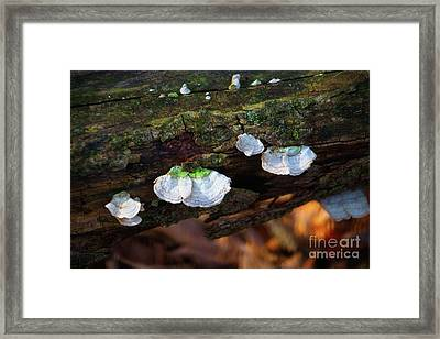 Framed Print featuring the photograph Natures Ruffles - Cascade Wi by Mary Machare