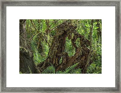 Nature's Sculpture Framed Print