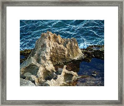 Natures Sculptures IIi Framed Print by Patricia Griffin Brett