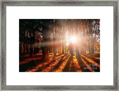 Nature's Shadows Framed Print by Alessandro Giorgi Art Photography