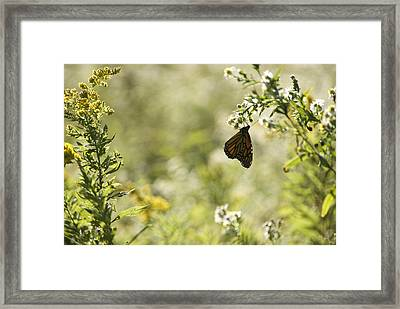 Framed Print featuring the photograph Natures Simplicity by Elsa Marie Santoro