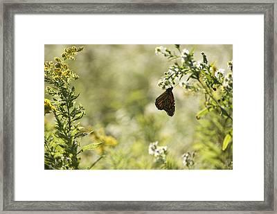 Natures Simplicity Framed Print by Elsa Marie Santoro