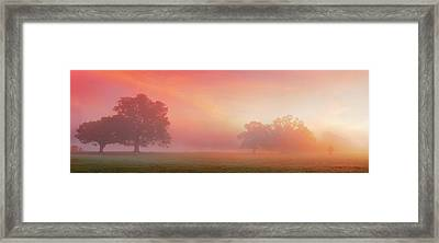 Natures Spectacle Framed Print