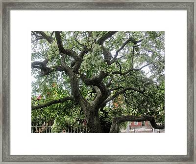 Natures Strength Framed Print