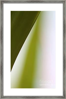 Natures Swerve Framed Print by Amanda Barcon