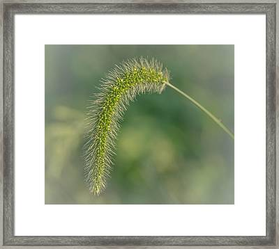 Natures  Tail Framed Print