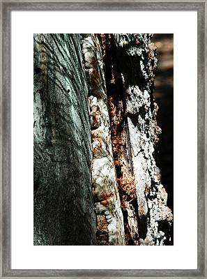 Natures Textures  Framed Print by Brigid Nelson