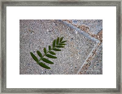 Nature's Trace Framed Print