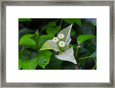 Nature's Triplets Framed Print