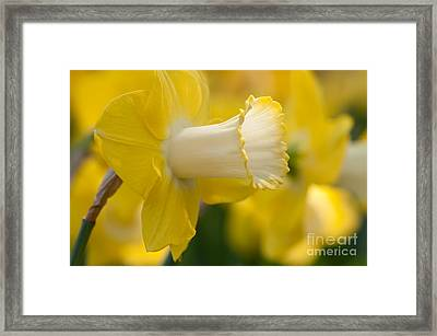 Nature's Trumpet Framed Print by Charles Dobbs
