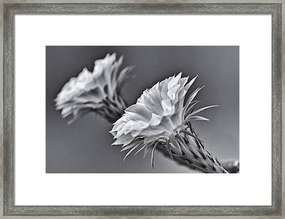 Nature's Trumpets Framed Print