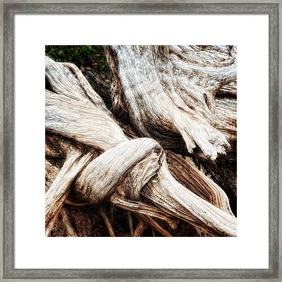 Nature's Twist - Bryce Canyon Framed Print by Bob Coates