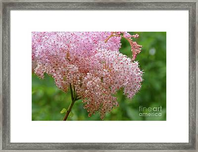 Natures Untouched Beauty Framed Print