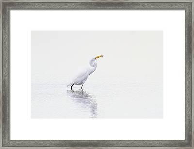 Natures Way Framed Print by Karol Livote