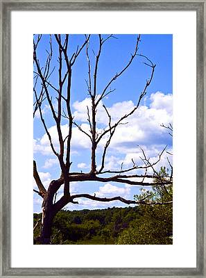 Natures Way Framed Print by William Furguson